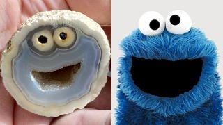 Cookie Monster Rock