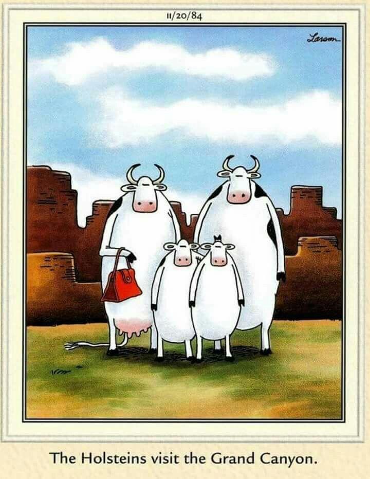 Far Side Holsteins